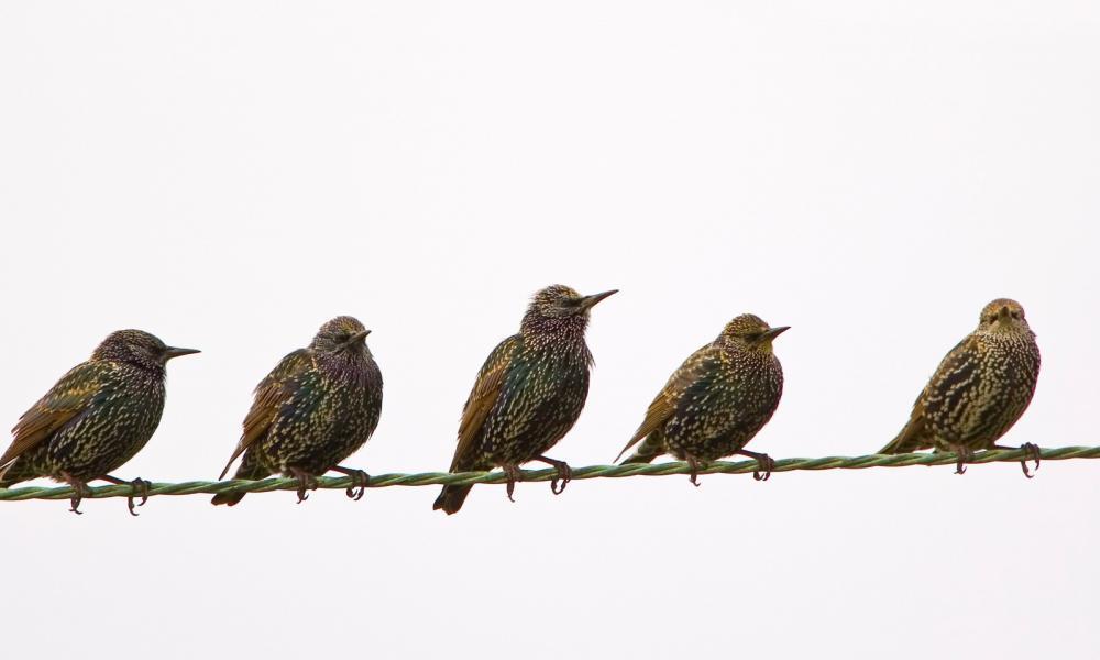 a madarak internetes bevétele